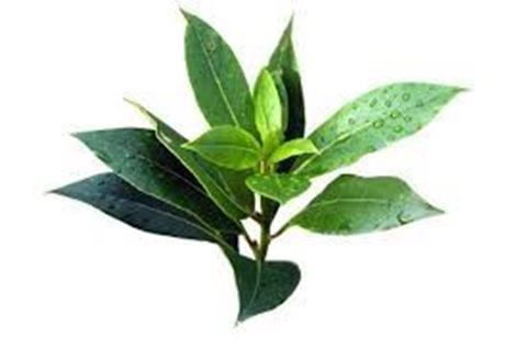 Bιολογικό tea tree 10ml